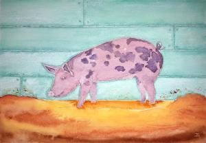 Pig of Lore ~ Watercolor by John Klobucher